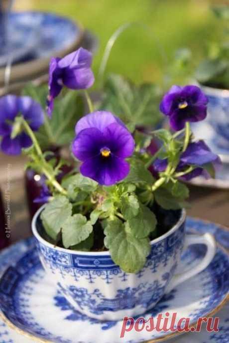 Счастье всегда заключается в простых вещах. В таких, например, как выходной, воскресный чай или просто покой в твоем сердце...