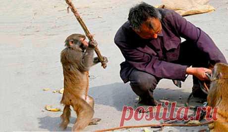 На меня напала обезьяна. Что делать если макака напала на вас на Бали   Папа на отдыхе   Яндекс Дзен