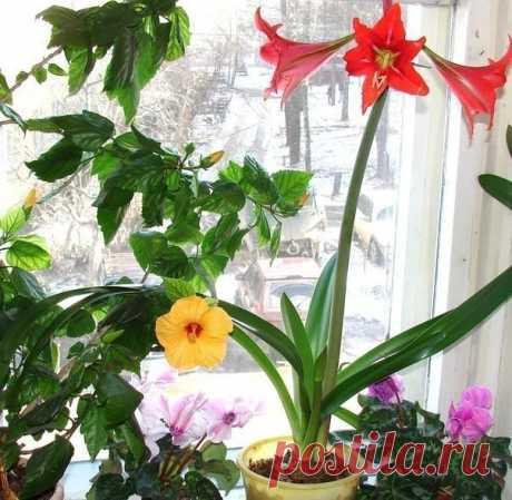 Интересная подкормка для домашних цветов! «Дача» Интересная подкормка для домашних цветов! Глюкозу и витамин В1 используют для удобрения особо ценных комнатных и кадочных растений. На 5 литров воды нужно 5 мл глюкозы и 2 мл витамина В1...