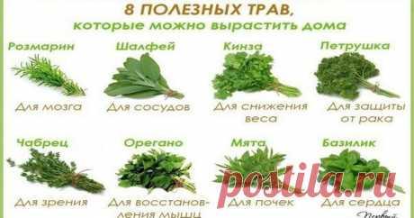 8 полезных трав, которые можно вырастить дома Травы которые сберегут ваше здоровье