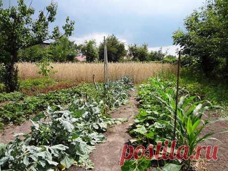 Совместимость овощей на огороде