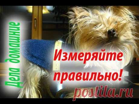 Основные ошибки,допускаемые при снятии мерок с собаки.