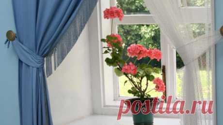 Как ухаживать за комнатной геранью? | Растения