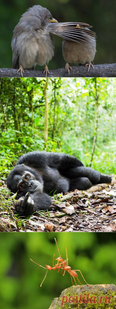 Лучшие работы конкурса самых смешных фотографий дикой природы: matveychev_oleg