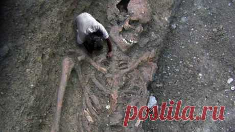 В Эквадоре обнаружили скелет человека невероятных размеров