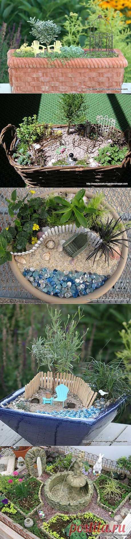 Зимний сад в доме и во дворе | Миниатюрный сад в плошке