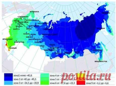 USDA-зоны морозостойкости растений в России: как не наткнуться на неженку
