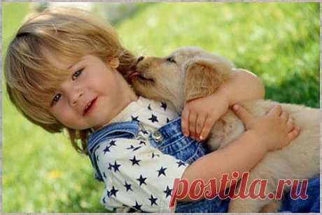 Собака и ребенок | ZooTovar.ru - Интернет-издание о животных, домашние питомцы