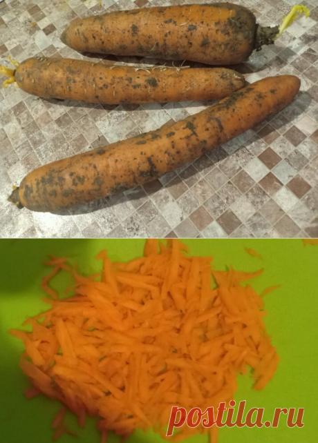 Морковь! Корнеплод, который полезен практически каждому, убедился в этом на собственном опыте | Готовить-гениально просто | Яндекс Дзен