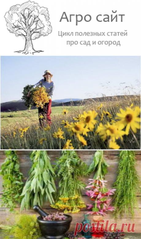 Как правильно собирать, сушить и хранить лекарственные растения