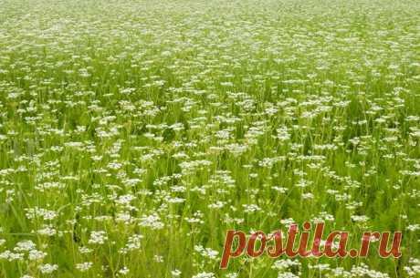 Лекарственные растения: 45рецептов для здоровья желудка ипечени | Блог о здоровье