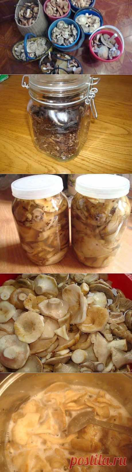 Заготовка грибов на зиму. Солим, сушим, маринуем | 4vkusa.ru