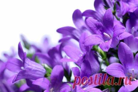 Картинки цветов на белом фоне (34 фото) ⭐ Забавник