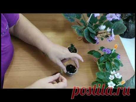 Укоренение цветоносов