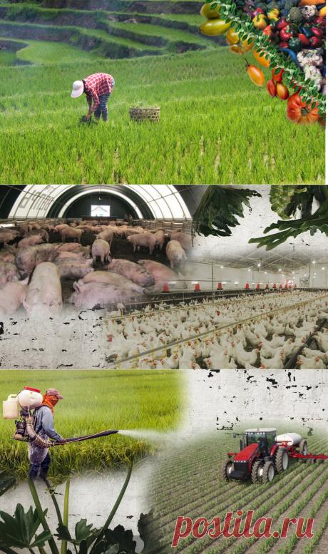 🍒2 причины, почему я считаю, что в деревне экология такая же плохая, как и в городе | Живые будни 🍒 | Яндекс Дзен