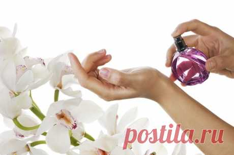 6 волшебных точек на человеческом теле, куда стоит наносить парфюм. - Женский Журнал  Парфюм – это твоя визитная карточка, и чтобы тебя узнавали по нему, очень важно научиться правильно его наносить. Оказывается, запястья – это не единственные точки на человеческом теле,куда наносить парфюм. И если научиться все их использовать правильно и с умом, твой аромат будет витать в воздухе очень долго! Куда наносить духи Волосы Основатель парфюмерной …