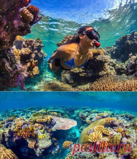 Красочное чудо - Большой Барьерный риф / Туристический спутник