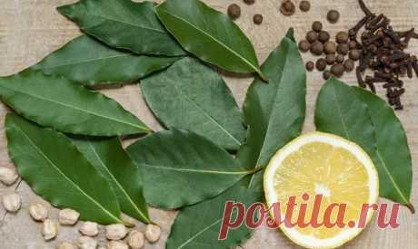 Лавровый лист: лечебные свойства и применение, противопоказания Лавровый лист - от чего помогает. Полезные свойства и противопоказания для применения сухих листьев лавра. Использование лаврушки для лечения простуды.