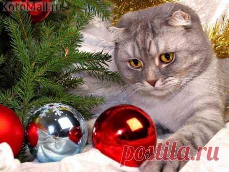 Пушистый кот - уютный год