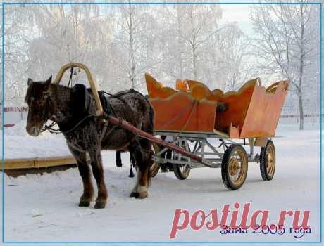 Сложности выживания моего конного клуба | Интересно о лошадях | Яндекс Дзен