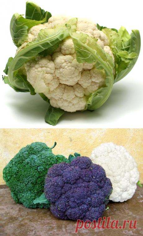 Особенности выращивания цветной капусты — 6 соток