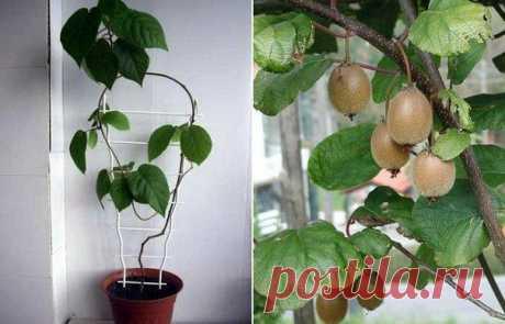 Комнатные растения | Экологическое землетворчество