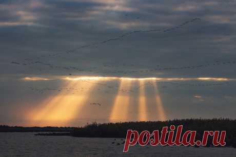 Рассвет в дельте Волги, Астраханский заповедник. Снимал Андрей Белавин: nat-geo.ru/community/user/180677 Погожего дня! 💛