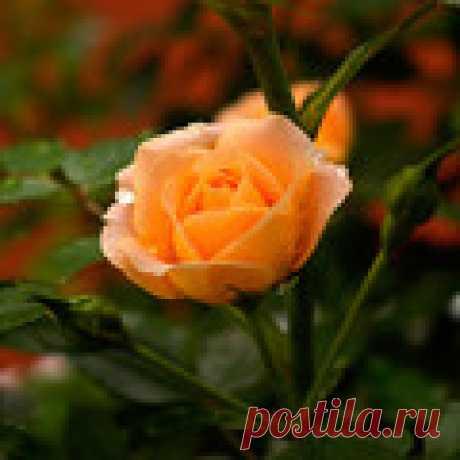 Саипова  Карлыгаш