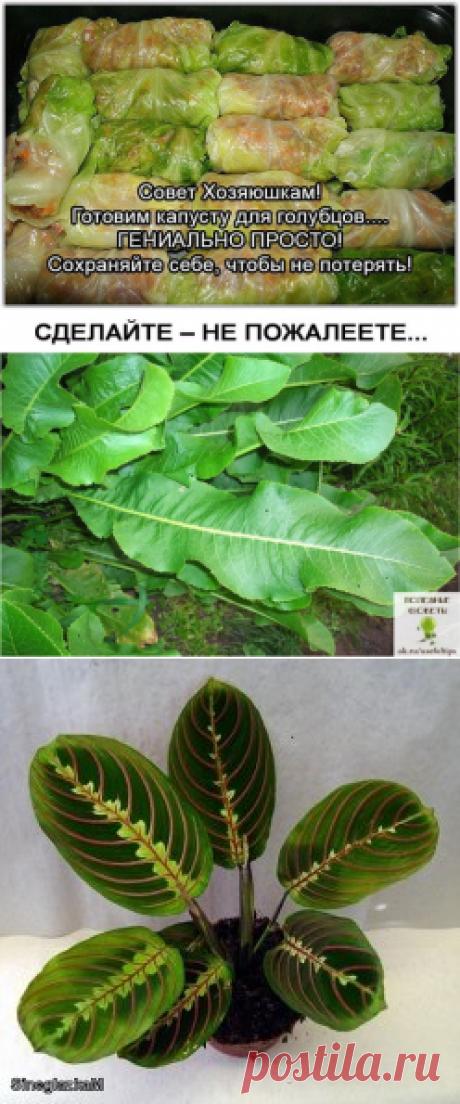 Выведение солей из организма при помощи .....ХРЕНА)))