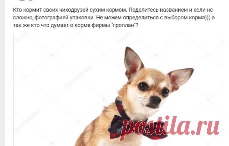 = Собаки ЧИХУАХУА =