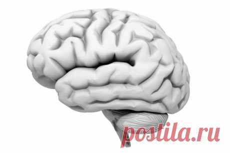 В цифрах и фактах: после 30 лет размеры головного мозга уменьшаются В мозгу находится пульт управления нашим телом. Кроме того, мозг генерирует мысли (как нужные, так и полностью бесполезные) — и эта функция до сих пор вызывает массу вопросов у ученых: как и зачем мы думаем?