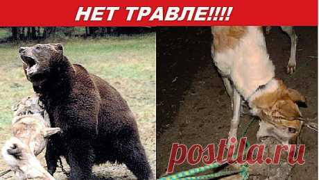 СПАСИТЕ ЖИВОТНЫХ, ПОДПИШИТЕСЬ,Petition   Запретить притравку на животных в России! Ban hounding in Russia!   Change.org