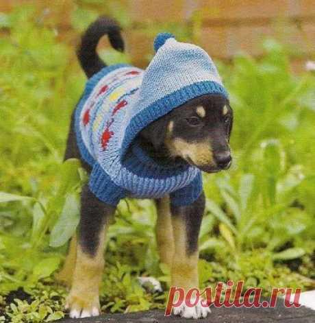 Свитер с капюшоном для собаки
