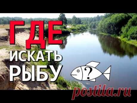 Где искать хищника на незнакомой реке : НР #5