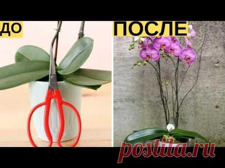 И Ваша орхидея будет цвести круглый год. 7 важных секретов по уходу за орхидеями   Я знаю