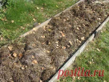 Умный огород Замяткина: участок не знает лопаты уже 20 лет — Лайм
