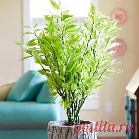 Педилантус: уход в домашних условиях, пересадка и размножение Растение педилантус (Pedilanthus) является частью рода Молочай семейства Молочайные. Это растение представлено низкорослыми деревьями и декоративно-цветущими кустарниками.
