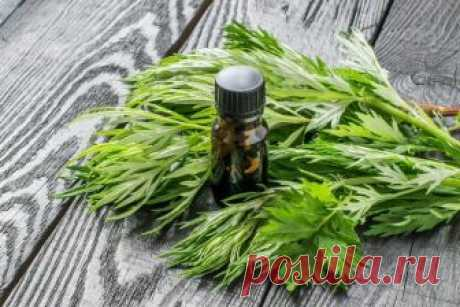 Simple means from trailing birthmarks Two-week therapy by essential oil of a wormwood is capable to create a real miracle with skin, it is necessary to use this gift of the nature only correctly. The wormwood bitter was appreciated by our ancestors for a long time, and not...