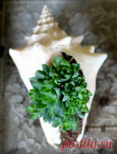 Растения в морских раковинах. Стильный элемент декора!