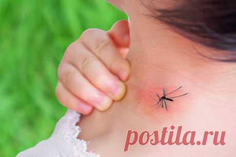 Как избавить детей от комаров и зуда после укусов? — Ботаничка.ru