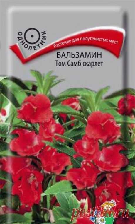 """Семена """"Бальзамин. Том Самб скарлет"""" (вес: 0,1 г)"""
