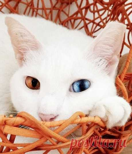 Что притягивает в дом кошка? Узнай по цвету ее шерстки! | ДОМ | Яндекс Дзен