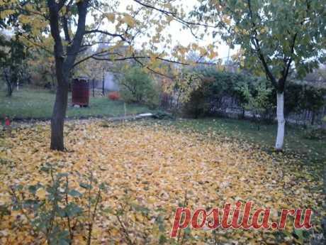 Осень в саду, на даче.