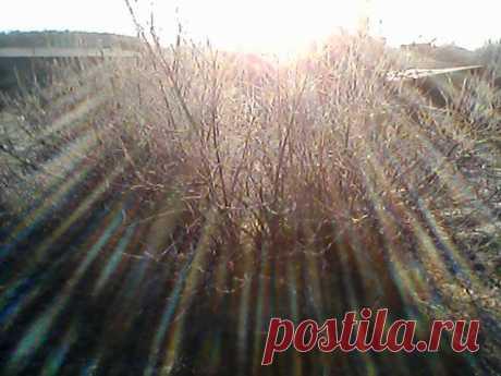 Зимнее утро.1 ноября 2013 г.