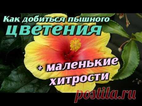 Вот она МАЛЕНЬКАЯ ХИТРОСТЬ чтобы цветы в доме цвели пышно и долго Самые полезные советы - YouTube