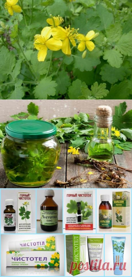Чистотел – полезные свойства и противопоказания, рецепты здоровья и отзывы