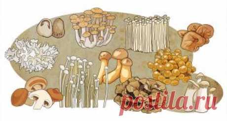 Азиатские грибы Шефский гид по шиитаке, эрингам, наметаке и их друзьям-землякам