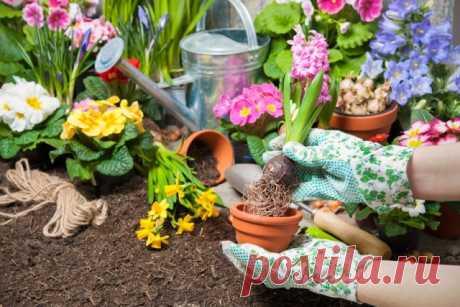 Как часто нужно поливать комнатные цветы – график на весь год | Полезно (Огород.ru)