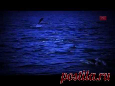 ♥♫ la Relajación con los delfines ♫♥