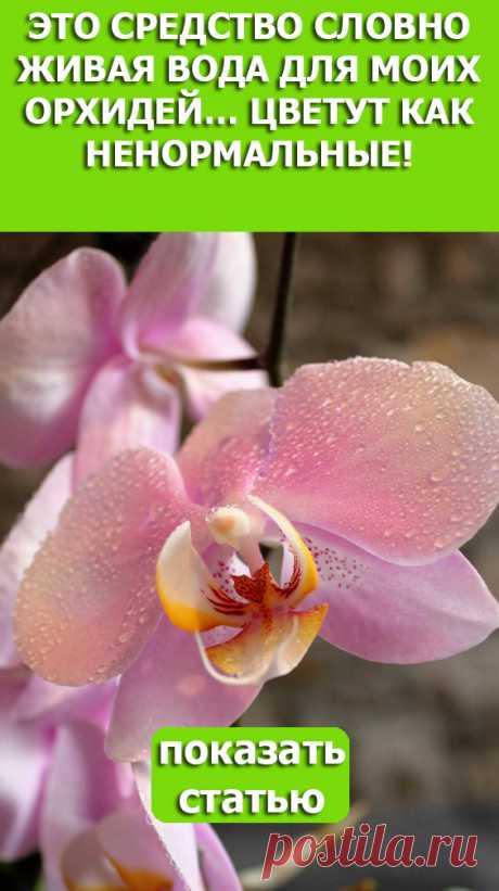 Смотрите! Это средство словно живая вода для моих орхидей… Цветут как ненормальные